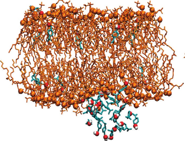 Extracts of the Perilla plant inserting into a lipid membrane. http://www.sciencedirect.com/science/article/pii/S0006349510013779 and http://pubs.acs.org/doi/abs/10.1021/jp108675b