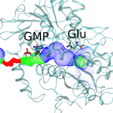 The binding of Glutamate and GMP to the Umami receptor, and the subsequent closure of the substrate binding pathway. See http://onlinelibrary.wiley.com/doi/10.1111/j.1742-4658.2012.08690.x/abstract